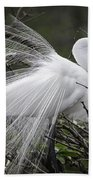 Great Egret Preening Beach Towel