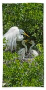 Great Egret With Chicks On The Nest Beach Towel