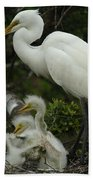 Great Egret With Young Beach Towel