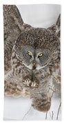 Great Gray Owl Pictures 634 Beach Towel