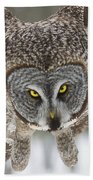 Great Gray Owl Pictures 648 Beach Towel
