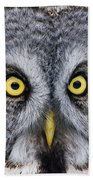 Great Gray Owl Pictures 680 Beach Towel