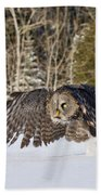 Great Gray Owl Pictures 740 Beach Towel