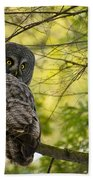 Great Gray Owl Pictures 779 Beach Towel