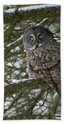 Great Gray Owl Pictures 780 Beach Towel