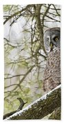 Great Gray Owl Pictures 804 Beach Towel