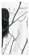 Great Grey Owl On The Lookout Beach Towel