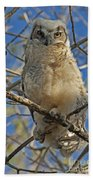 Great Horned Owl 2 Beach Towel