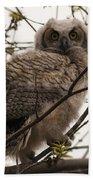 Great Horned Owlet 2 Beach Towel