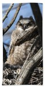 Great Horned Owlet Finishes Lunch Beach Towel