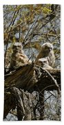 Great Horned Owlets Photo Beach Towel