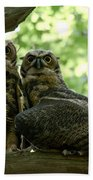 Great Horned Owls Beach Towel