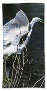 Great White Egret Building A Nest V Beach Towel