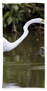 Great White Egret Looking For Fish 1 Beach Towel