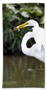 Great White Egret Show Off Beach Towel