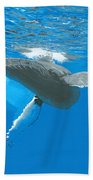 Great Wings Of New England Beach Towel