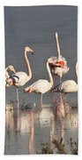 Greater Flamingos At Laguna De La Fuente De Piedra Beach Towel