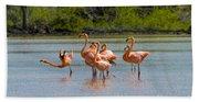 Greater Flamingos Beach Towel