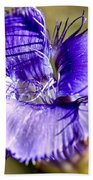 Greater Fringed Gentian Beach Towel