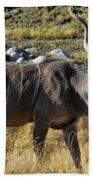 Greater Kudu Grazing Beach Towel