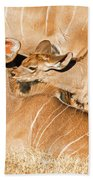 Greater Kudu Mother And Baby Beach Towel