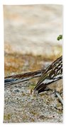 Greater Roadrunner With Nest Material Beach Towel