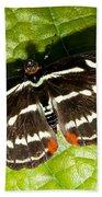 Grecian Shoemaker Butterfly Beach Towel