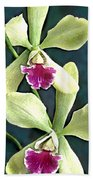 Green And Purple Cattleya Orchids Beach Towel