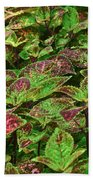 Green And Purple In Nature Beach Towel