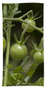 Green Cherry Tomatoes On The Vine Beach Towel