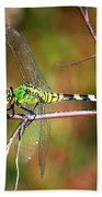 Green Dragonfly On Twig Square Beach Towel