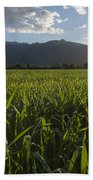 Green Field In Sunset Beach Towel