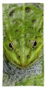 Green Frog Beach Towel by Matthias Hauser
