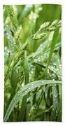 Green Grass After Rain Beach Towel
