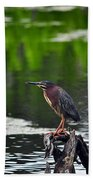 Green Heron Perch Beach Towel