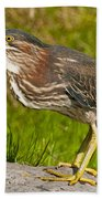 Green Heron Pictures 449 Beach Towel