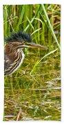 Green Heron Pictures 545 Beach Towel