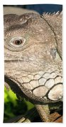 Green Iguana Face Beach Towel