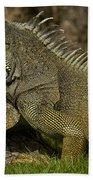Green Iguana Guayaquil Ecuador Beach Towel