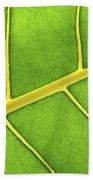 Green Leaf Close Up Beach Towel