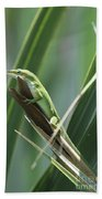 Green Lizard Beach Towel