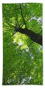 Green Maple Canopy Beach Towel
