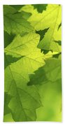 Green Maple Leaves Beach Towel by Elena Elisseeva