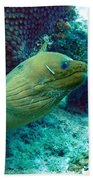 Green Moray Eel With Cleaning Fish Beach Towel