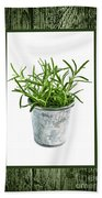 Green Rosemary Herb In Small Pot Beach Towel
