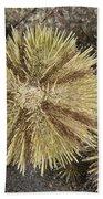 Green Sea Urchins Beach Towel