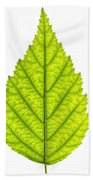 Green Tree Leaf Beach Towel