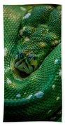 Green Tree Python Curled Beach Towel