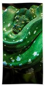 Green Tree Python Beach Towel
