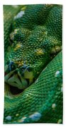 green tree python Macro Beach Towel